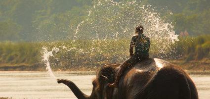 Indijski slon